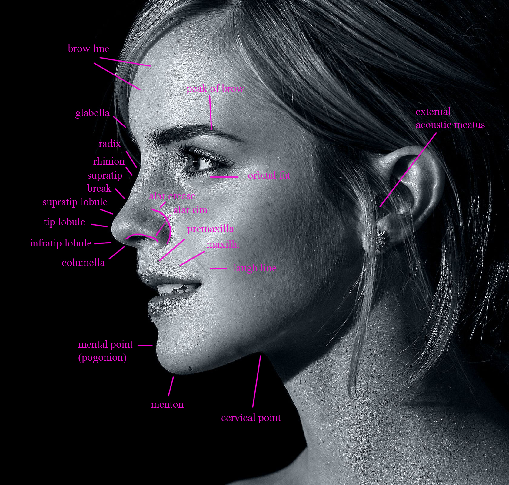 emma-watson-side-facial anatomy – Alex Collins